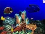 Aquatica 3D Fish Screen Saver