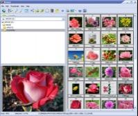 Able Image Browser 2.0.14.14 screenshot. Click to enlarge!