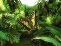 Butterfly Jungle 3D Screensaver 1.0 screenshot. Click to enlarge!