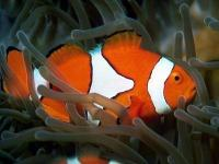 DPSM - Tropical Fish ScreenSaver 1.7 screenshot. Click to enlarge!