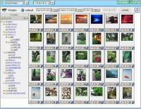 ImageIsland 3.00 screenshot. Click to enlarge!