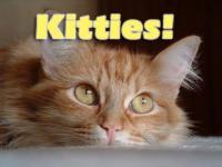 Kitties! Screen Saver 2.0 screenshot. Click to enlarge!