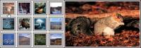 Thumb-Show 1.0 screenshot. Click to enlarge!