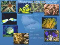 Undersea Life Screensaver 1.5 screenshot. Click to enlarge!