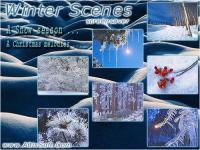 Winter Scenes Screensaver 1.1 screenshot. Click to enlarge!